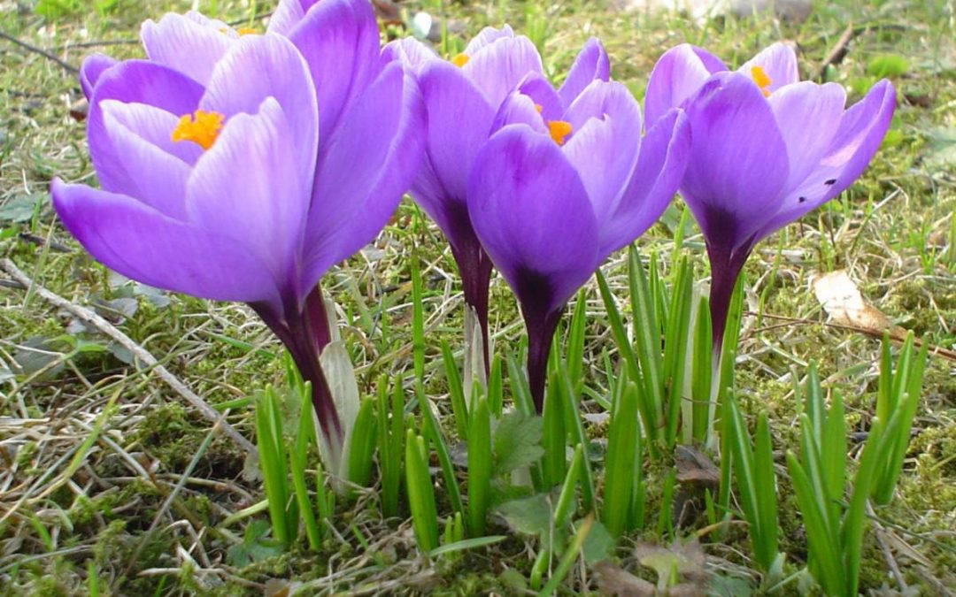March: Spring News and New Beginnings