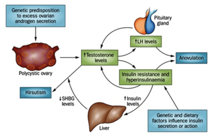 Insulin Resistance: The Background and the Solution